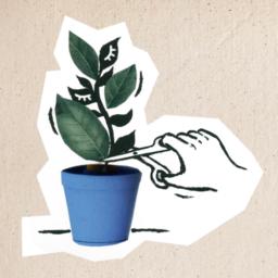 Na ilustracji ręka ucina nożyczkami kwiat doniczkowy.